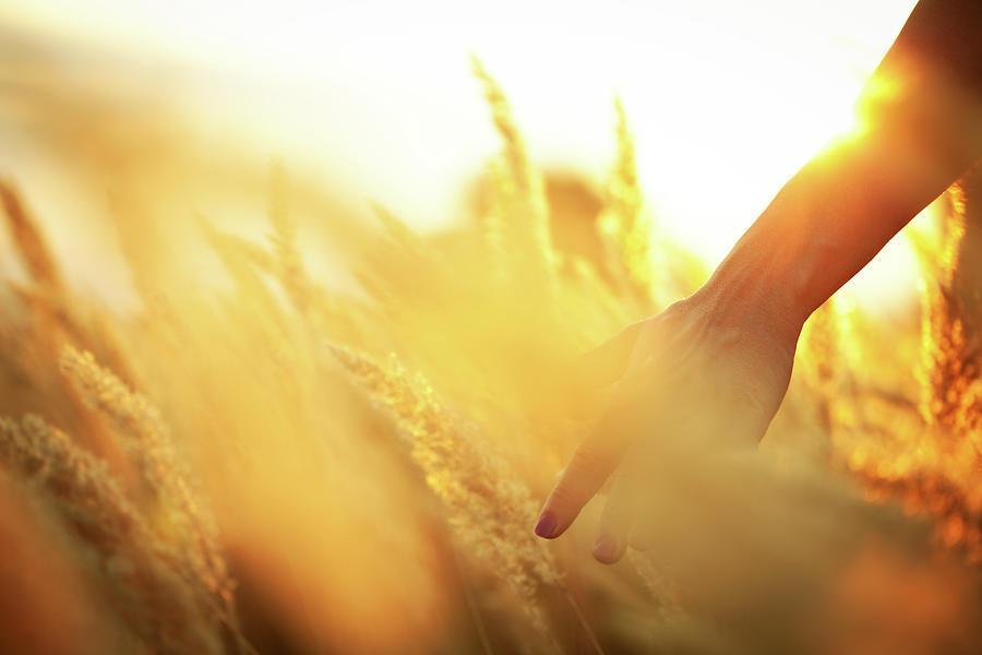 Harvest In The Morning Photograph by Aleksandarnakic