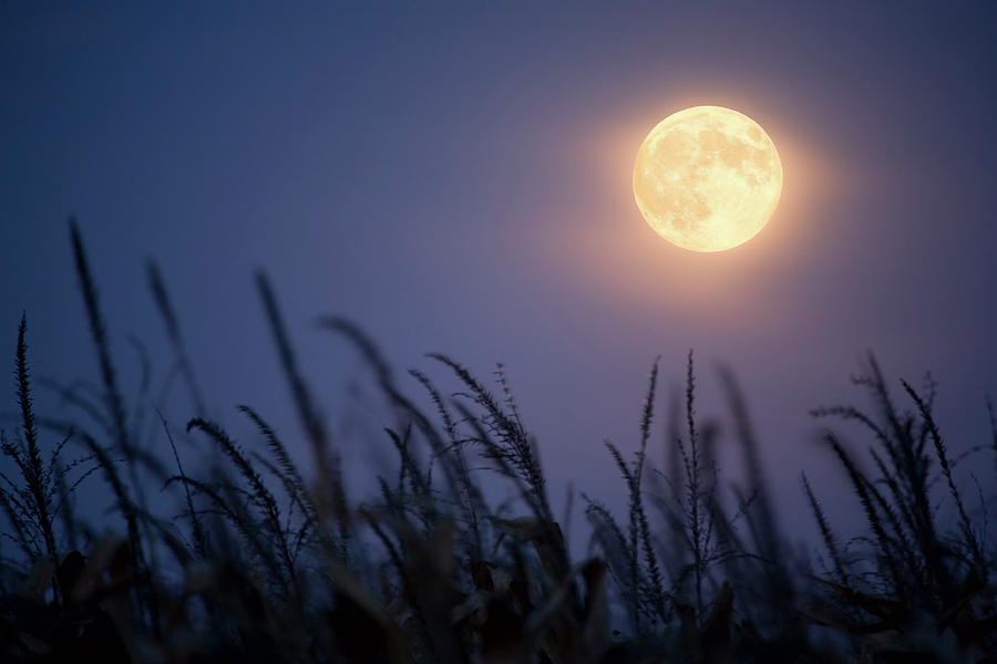 Harvest Moon Photograph by Jimkruger