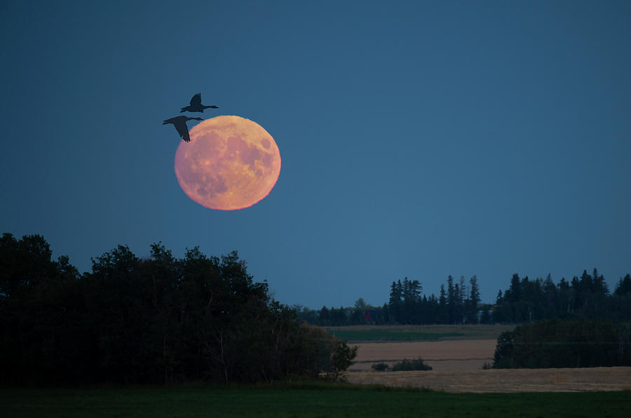 Harvest Moon Rise by Philip Rispin