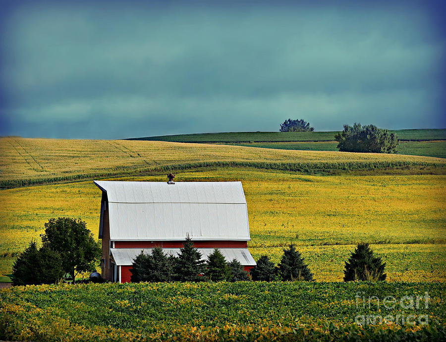 Harvest Time Is Around The Corner by Kathy M Krause