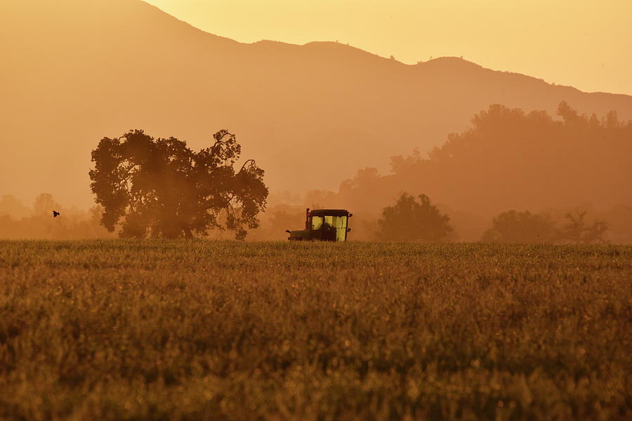 Harvester in Central California by Cindy McIntyre