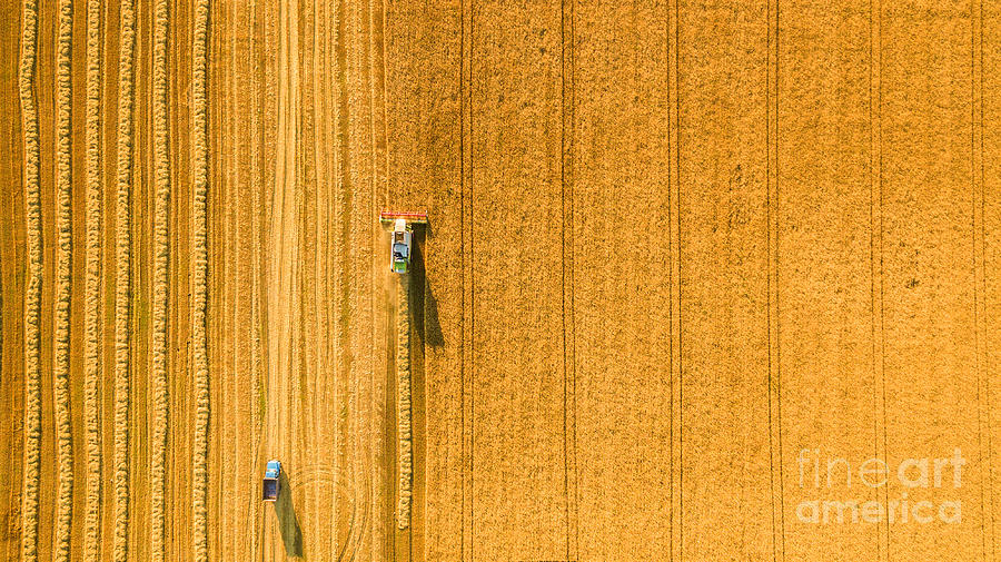 Country Photograph - Harvester Machine Working In Field by Lals Stock