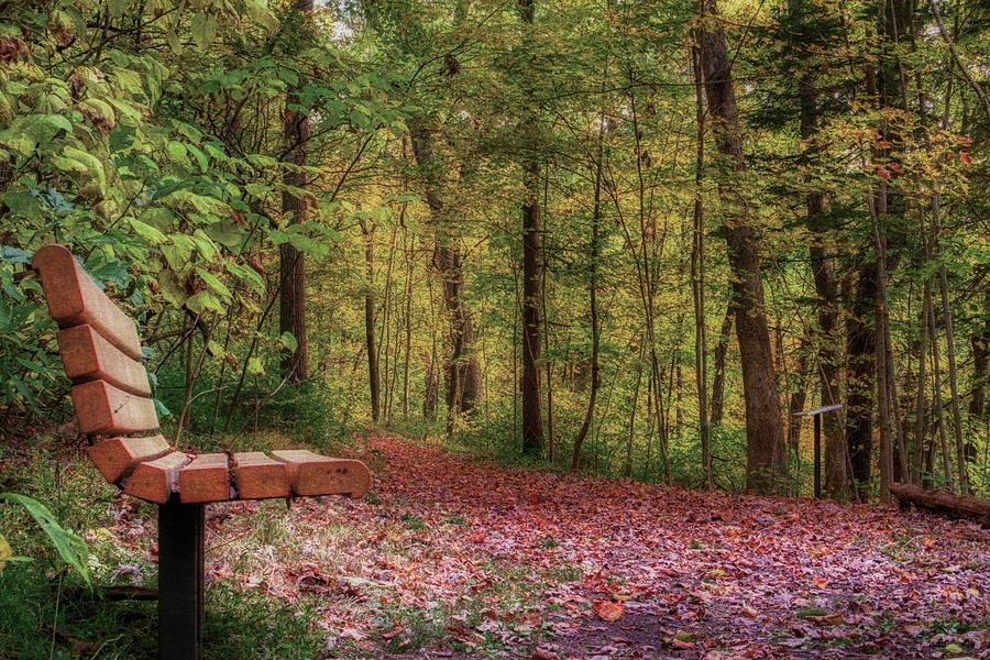 Hassen Creek Trail Bench by Jason Fink