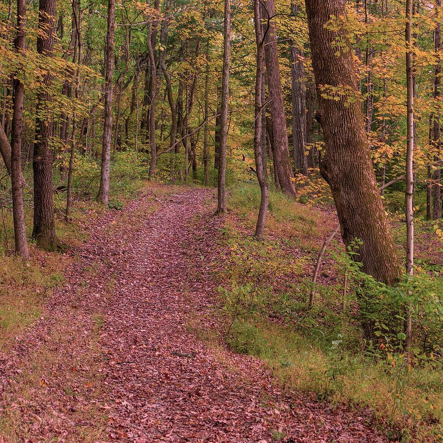 Hassen Creek Trail - Looking Back by Jason Fink
