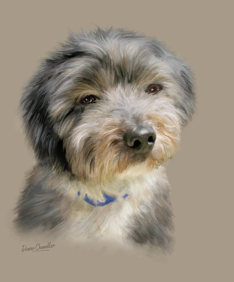 Havanese Puppy by Diane Chandler