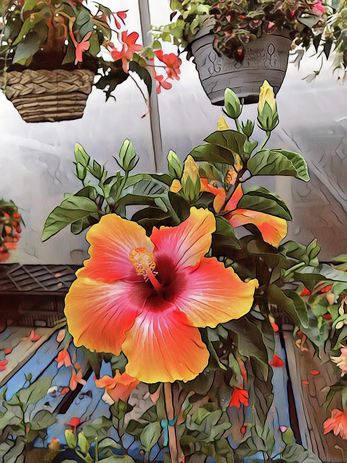 Hawaiian Flowers by Don Wright