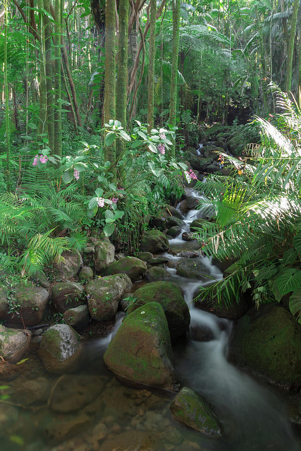 Hawaiian Stream by John Daly
