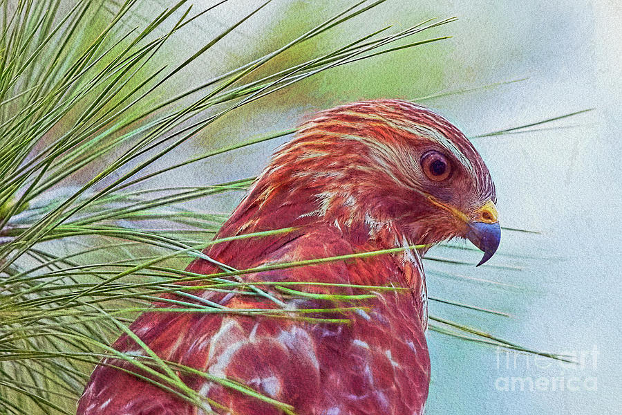 Hawk in Paint by Deborah Benoit