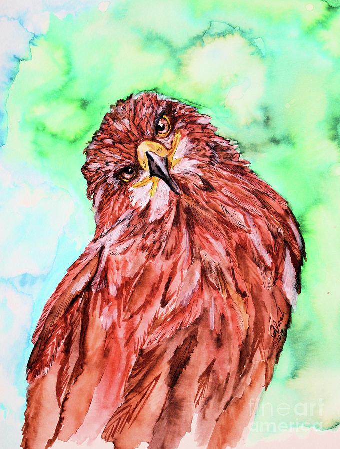 Hawks Eyes by Alorah Tout
