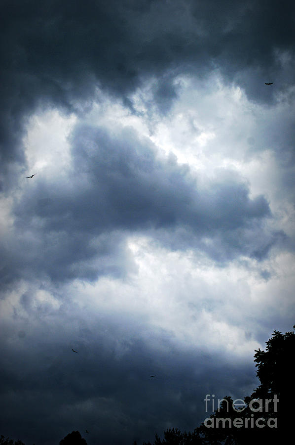Hawks in the Storm by Frank J Casella