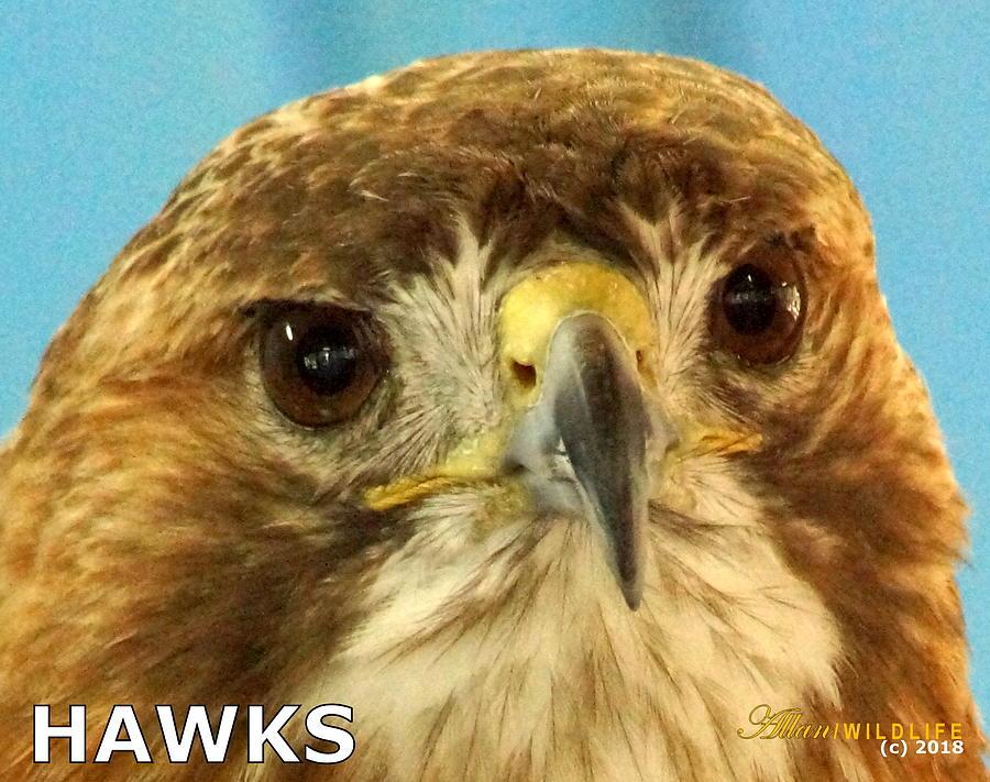 Hawks Photograph - Hawks Mascot 4 by Larry Allan