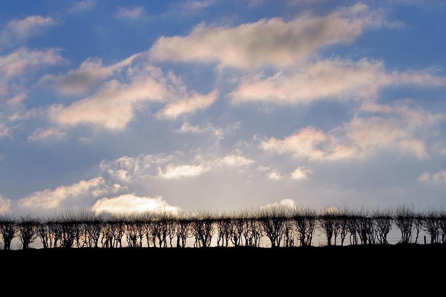 Hawthorne Hedge, England, Uk Photograph by Tim Graham