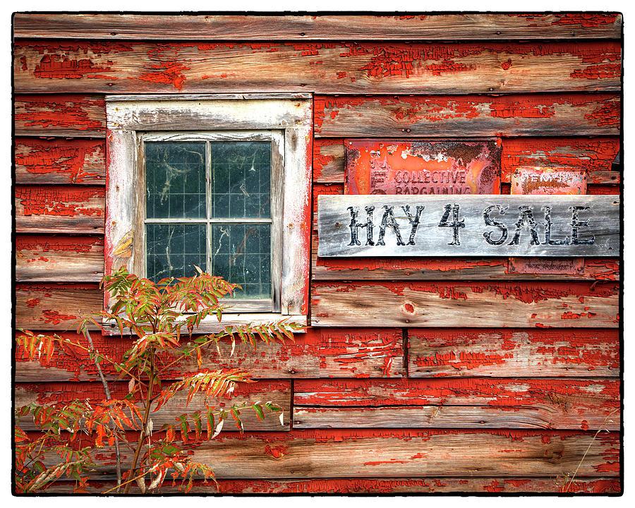 Hay 4 Sale  by Harriet Feagin