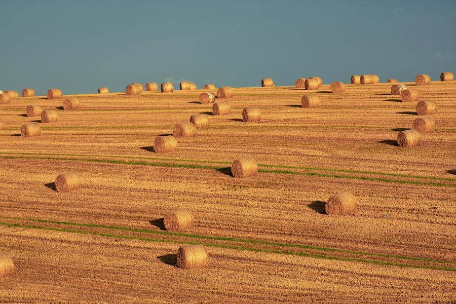 Hay Bales After Harvest, Mallow, County Photograph by Design Pics/peter Zoeller