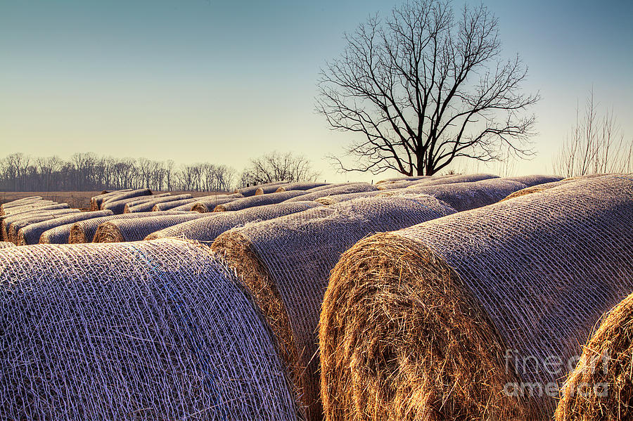 2014 Photograph - Hay Bales At Dusk by Larry Braun