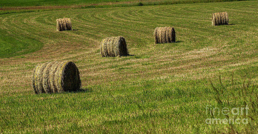 Hay Bales In Kalispell, Montana by Michael D Miller
