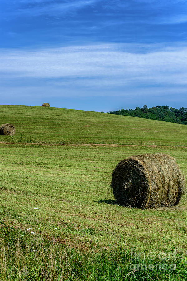 Hay Bales on a Hill by Thomas R Fletcher