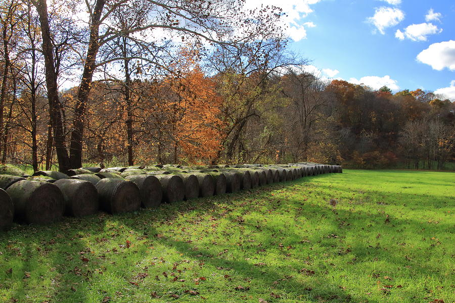 Hay Bales on an Autumn Day by Angela Murdock