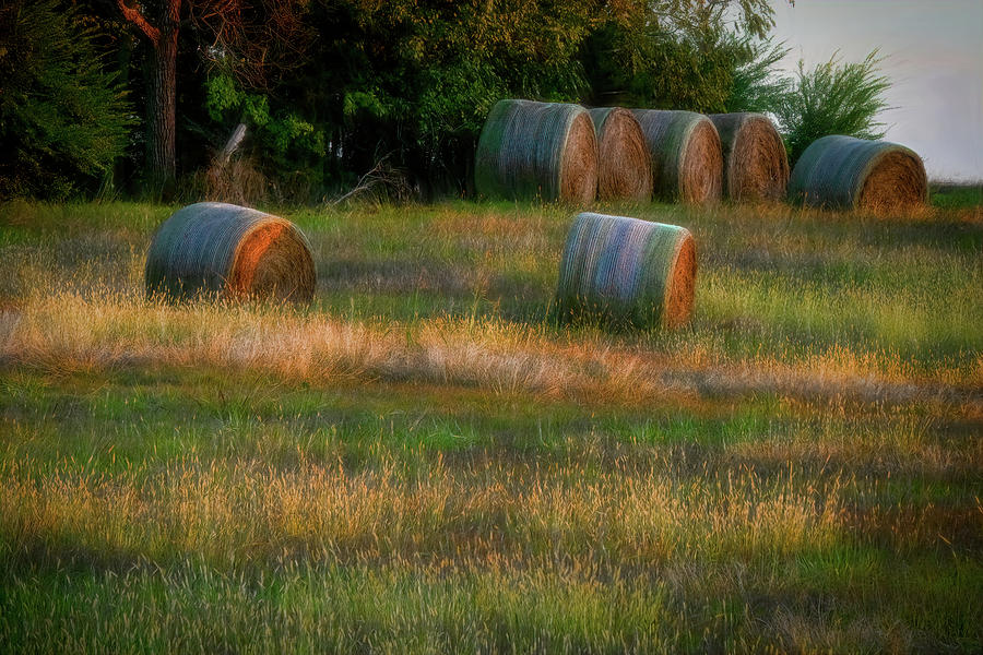 Hay Bales by Patricia Cale