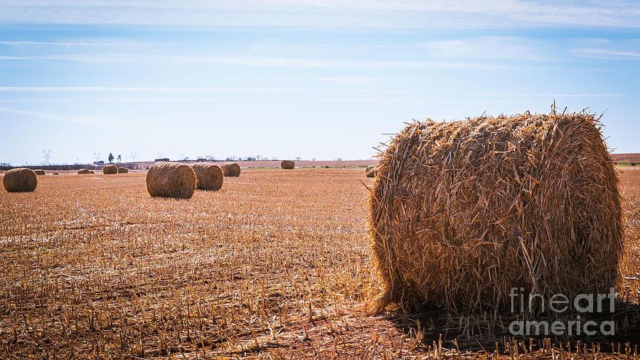 Hay Rolls by DHEERAJ MUTHA