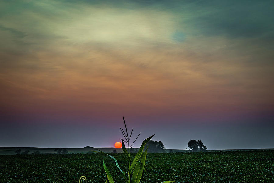 Agriculture Photograph - Hazy Summer Sunset by Mike Cox
