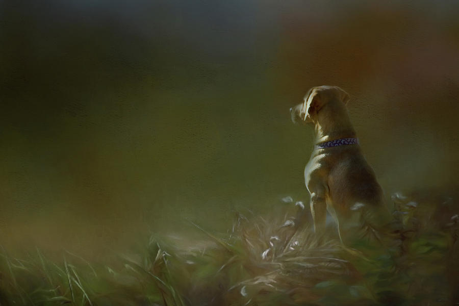 He Sits and Waits by Lana Trussell