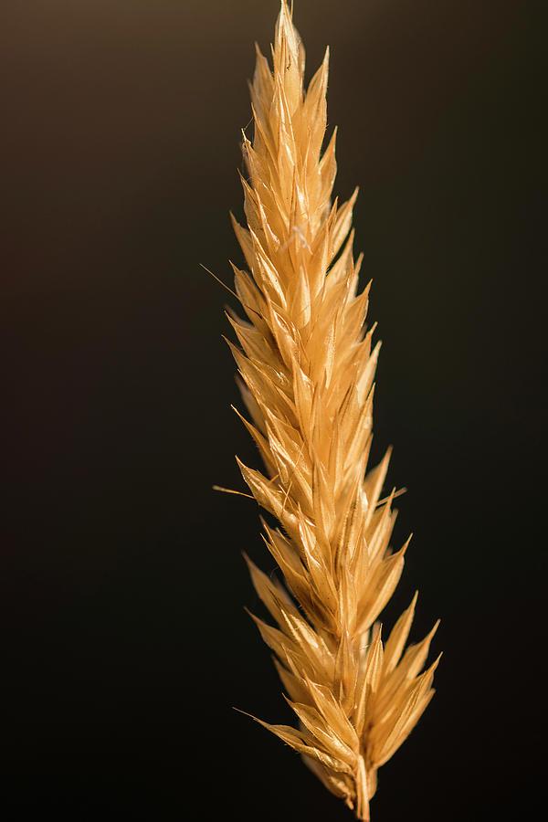 Head of Grass by Robert Potts