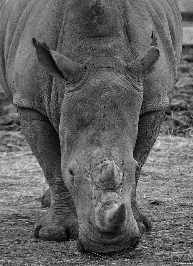 Animal Photograph - Head On  by Martin Newman