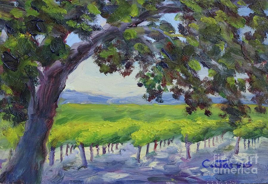 Healdsburg Vineyard by Carolyn Jarvis