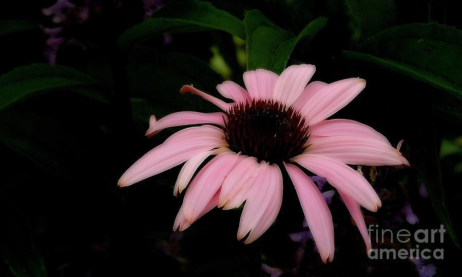 Healing Flower by Marcia Lee Jones