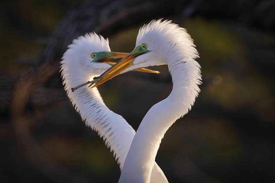 Nature Photograph - Heart Of Love by Michael Zheng
