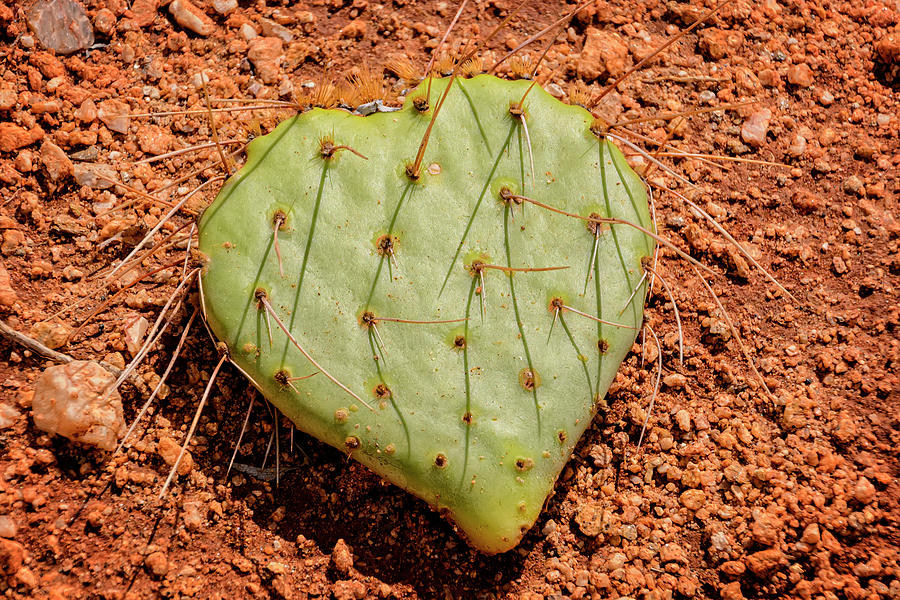 Heart Of Sonora Photograph