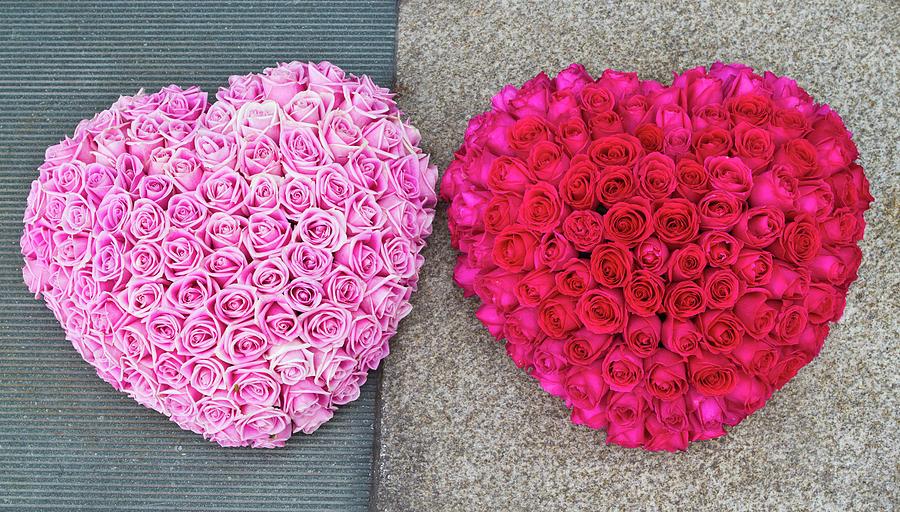 Heart Shape Flower Arrangement Photograph by Fraser Hall