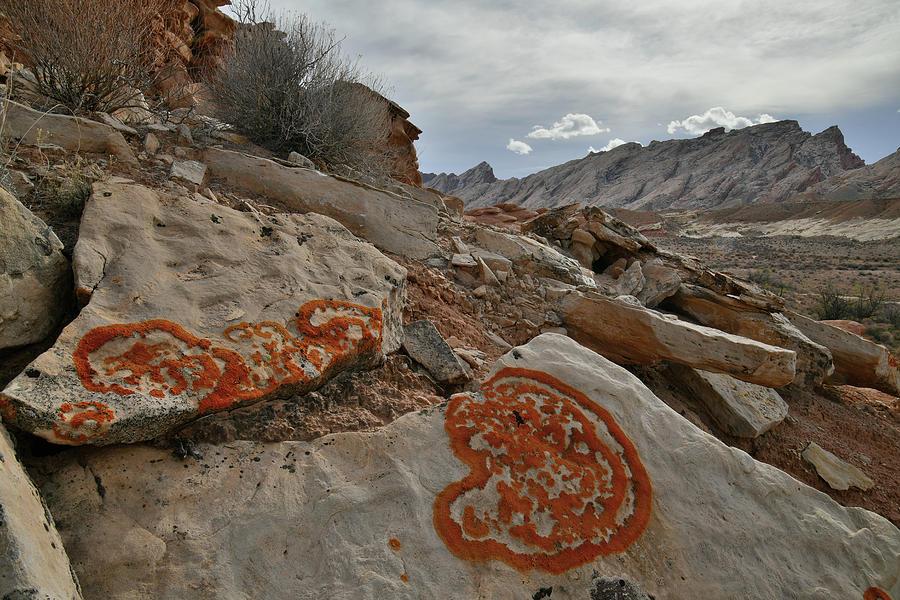 Heart Shape Lichens near San Rafael Swell in Urah by Ray Mathis