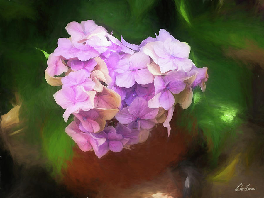 Heart Shaped Hydrangea by Diana Haronis