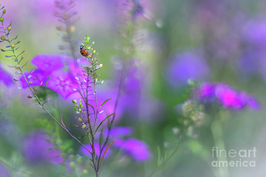 Heartsong In The Meadow by Mary Lou Chmura