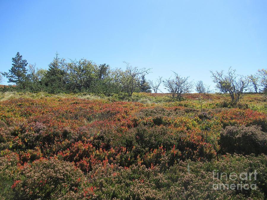 Heath land near Cret de l'Oeillon by Chani Demuijlder