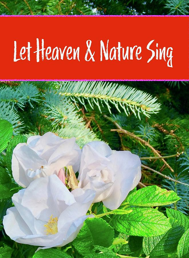 Heaven Nature Evergreens and Wild Roses by Debra Grace Addison