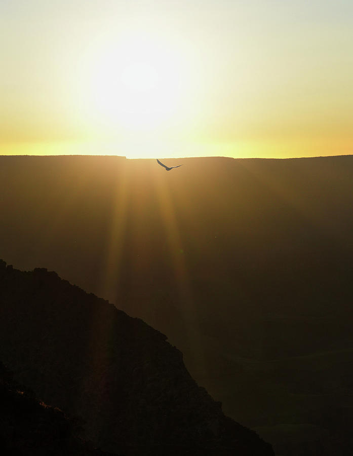 Heavenly Canyon Sunset and Bird  by Chance Kafka