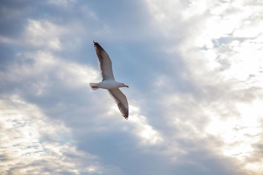 Heavenly Gull - Misquamicut Beach Photograph