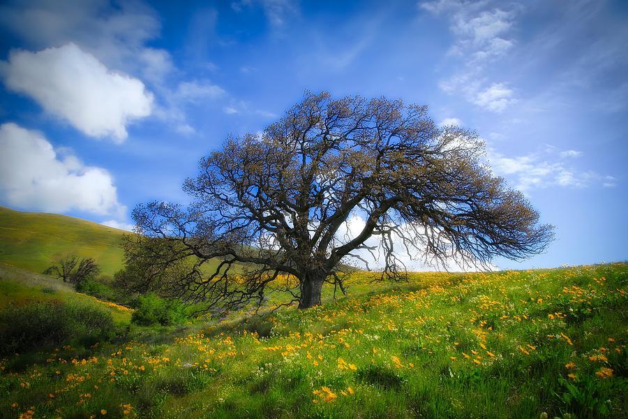 Heavenly hills  by Lynn Hopwood