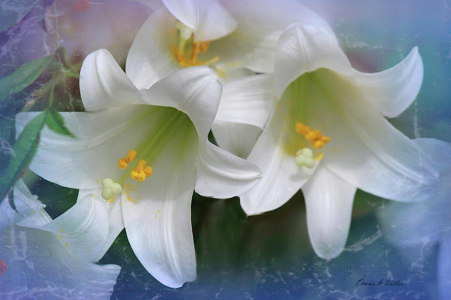 Heavenly Lilys by Bonnie Willis