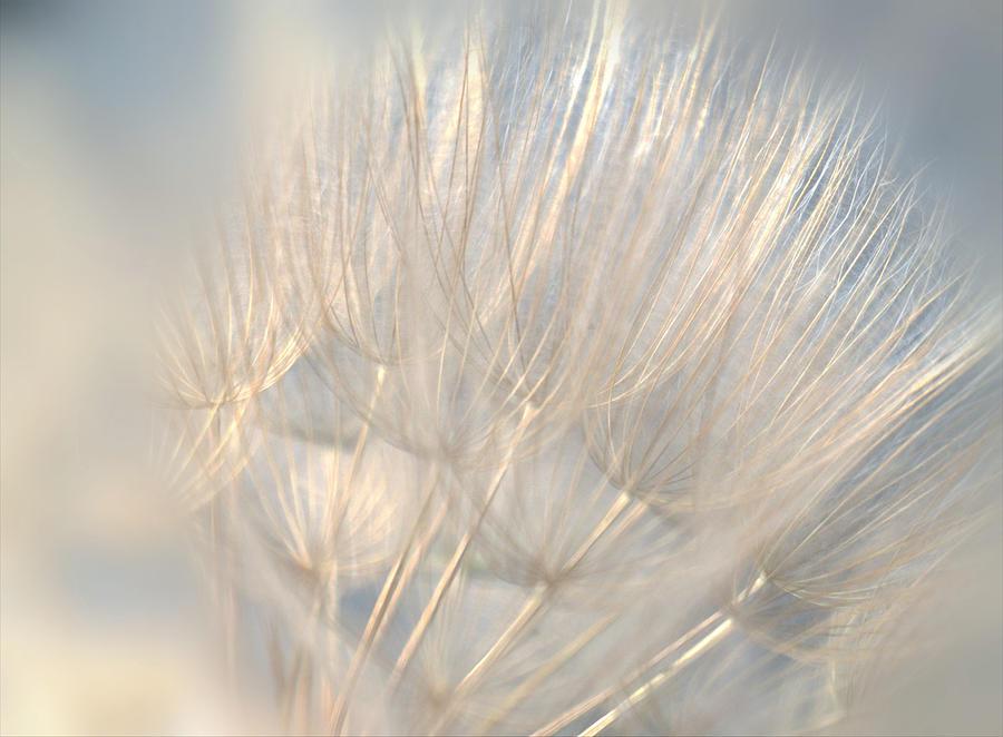 Heavenly Wishes by The Art Of Marilyn Ridoutt-Greene