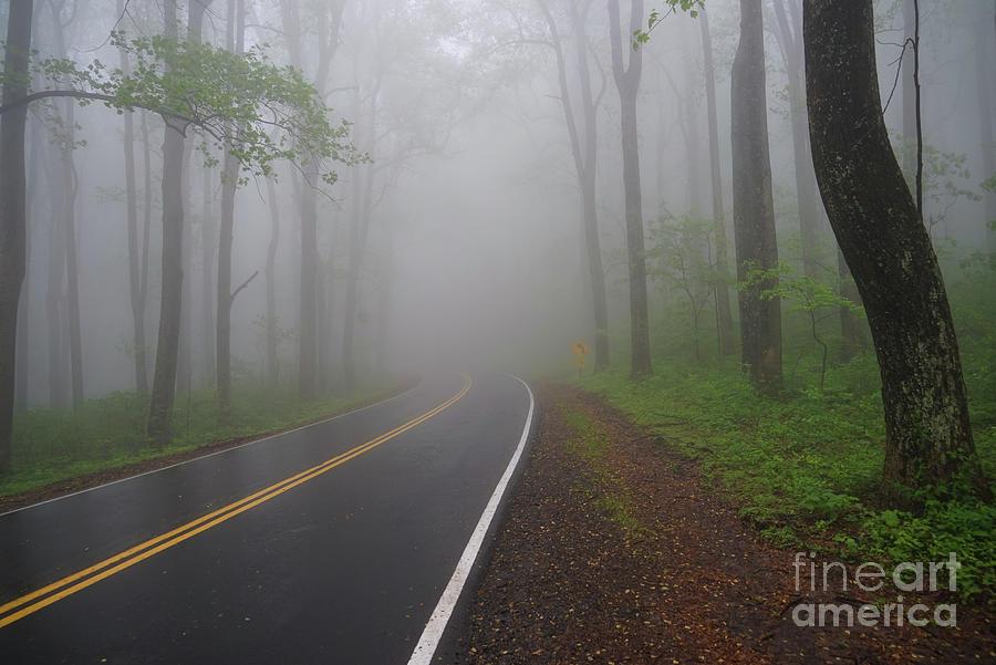 Heavy Fog Ahead by Rachel Cohen