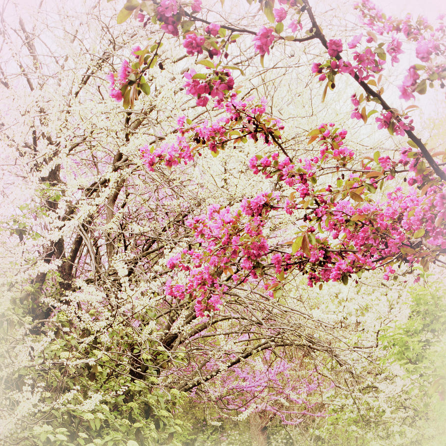 Spring Photograph - The Fleeting Nature Of Blossoms by Jessica Jenney