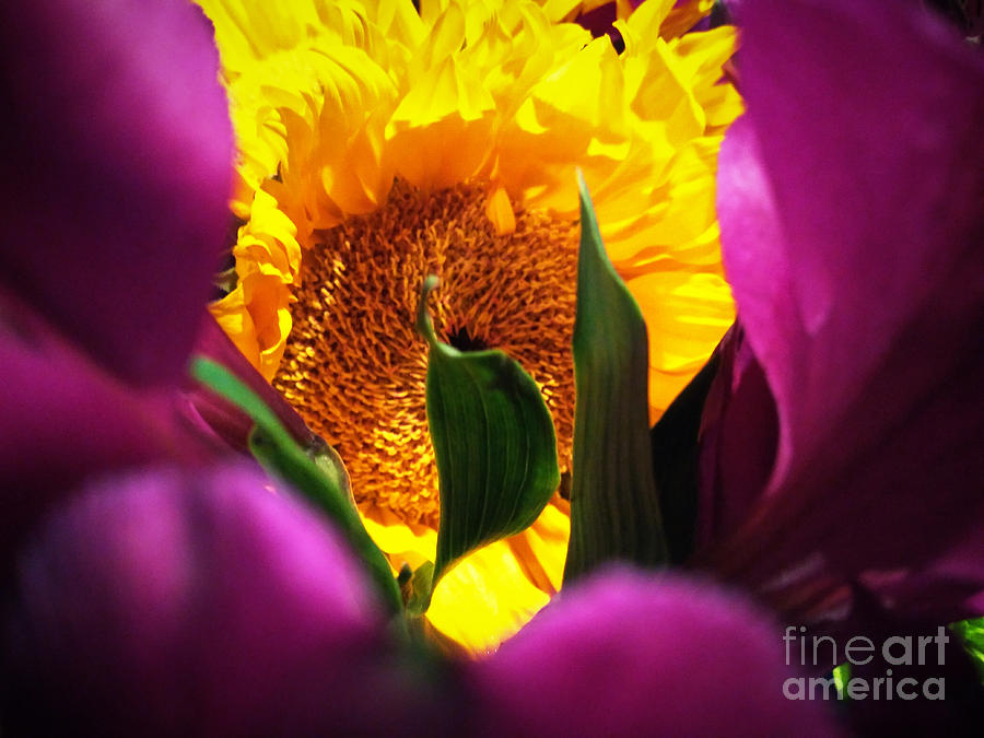 Yellow Photograph - Hello Yellow by Robert Knight