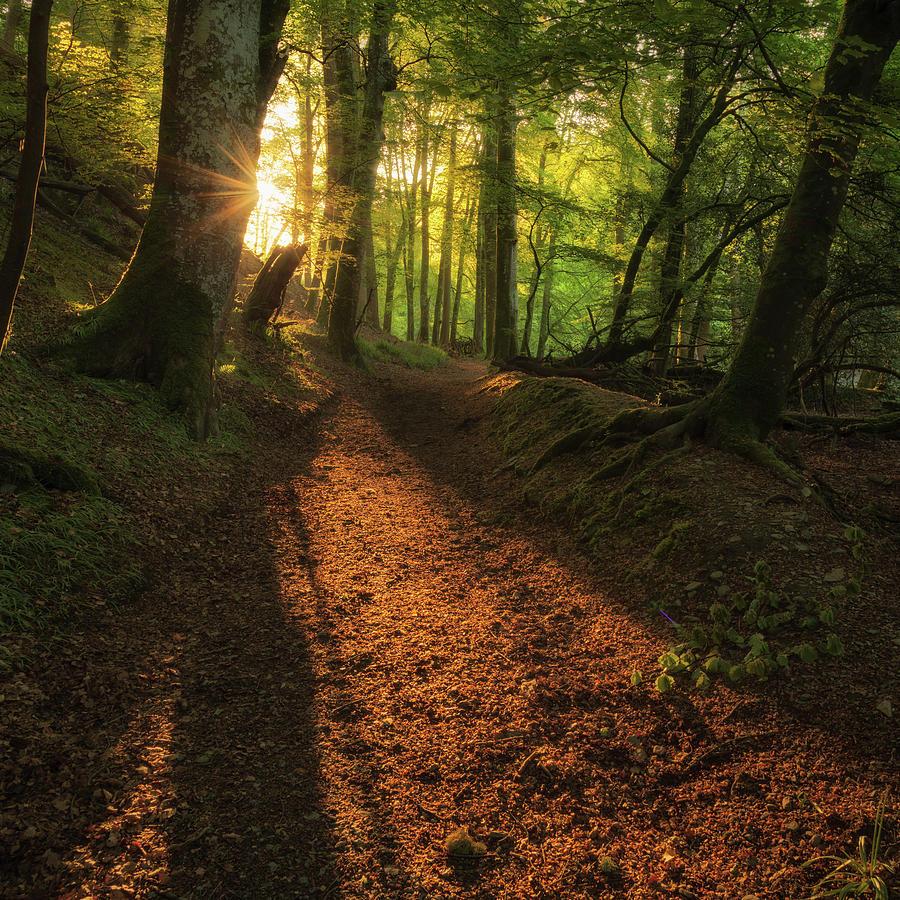 Henllan Woods Sunrise Photograph
