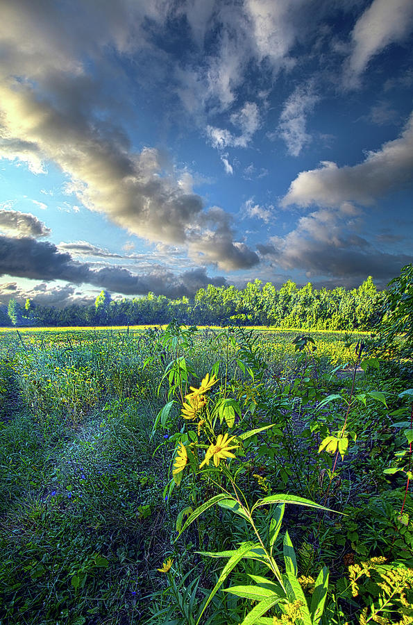 Life Photograph - Her Secret Is Patience by Phil Koch