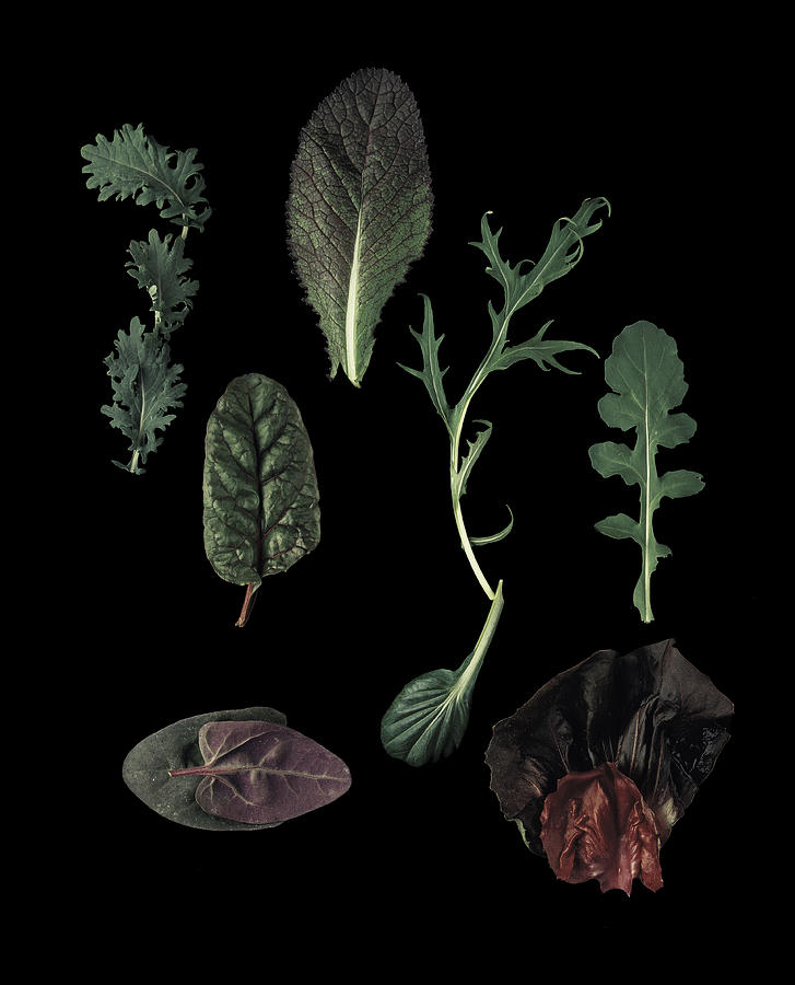 Black Background Photograph - Herbs Leaves On Black by Davies And Starr