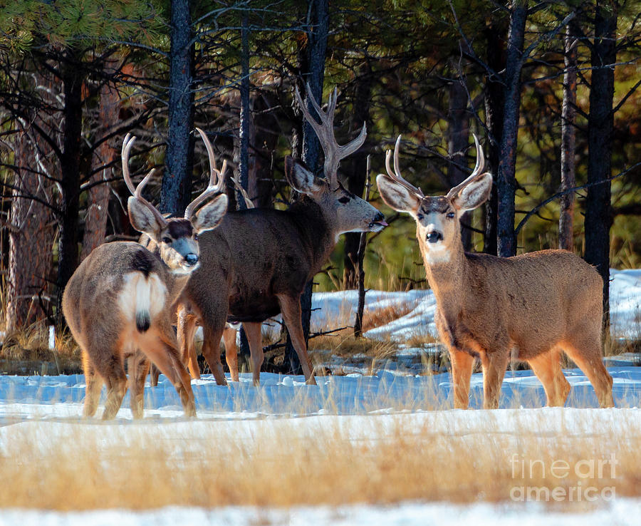 Herd Of Deer On A Winter Morning Photograph